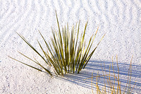 White Sands Green